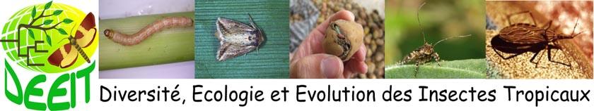 DEEIT_PAGE_bandeau_DEEIT