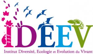 Logo Ideev en tête courrier