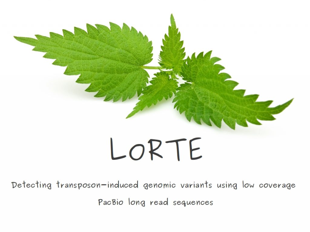 Logo_LoRTE